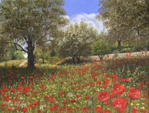 Andalucian Poppies