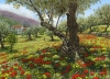 Andalucian Olive Grove